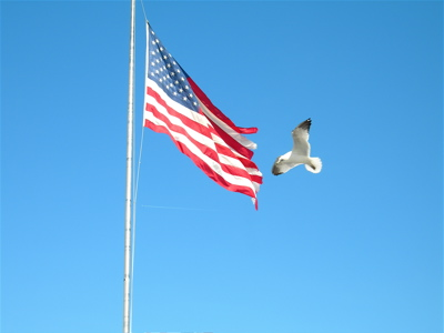 a bird and a flag